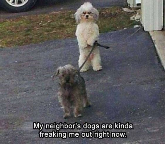 picture of a dog standing on two legs while holding a leash attached to another dog