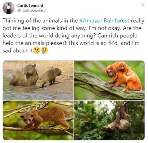 "Tweet that reads, ""Thinking of the animals in the #AmazonRainforest really got me feeling some kind of way. I'm not okay. Are the leaders of the world doing anything? Can rich people help the animals please?! This world is so fk'd and I'm sad about it"""