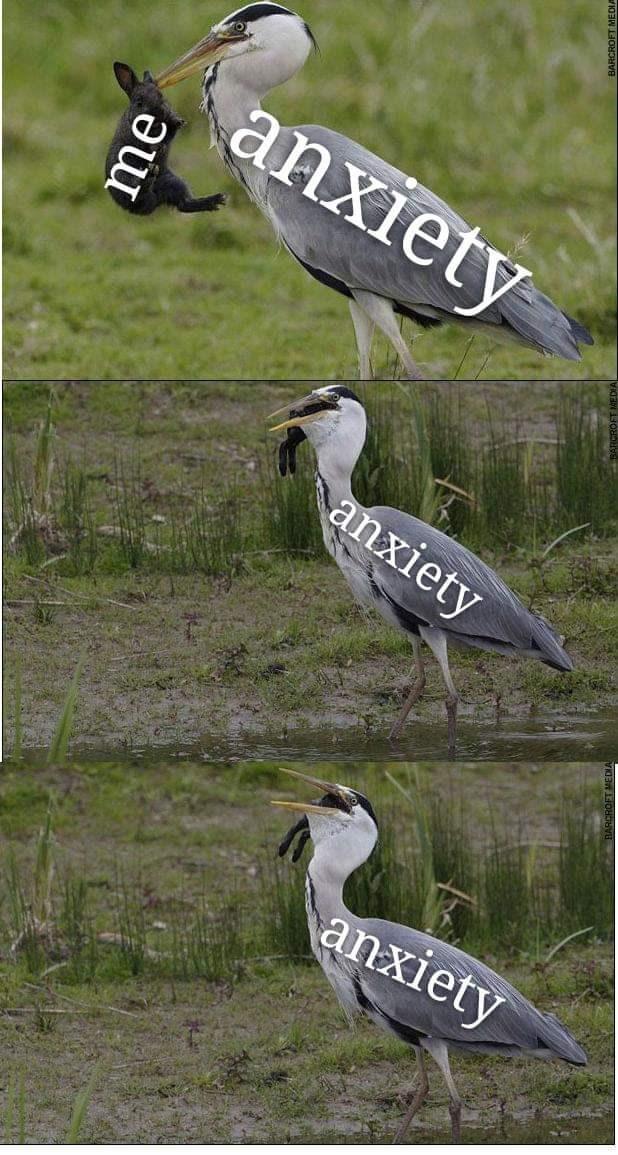Bird - anxiety anxiety anxiety u
