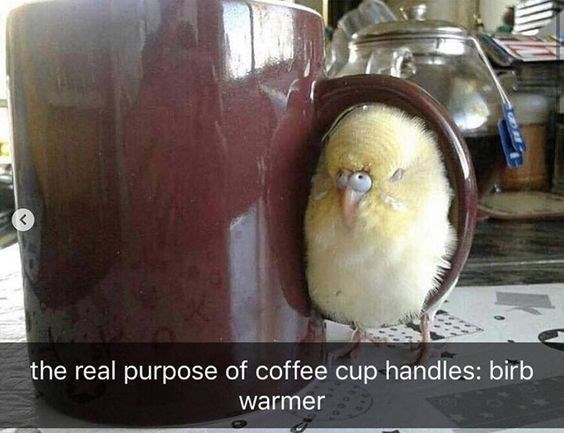 """Meme - """"the real purpose of coffee cup handles: birb warmer"""""""