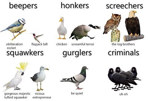Bird - beepers honkers screechers the log brothers flapjack bill chicken screamful terror obliteration rocket squawkers criminals gurglers be quiet vicious entrepreneur gorgeous majestic tufted squawker uh oh
