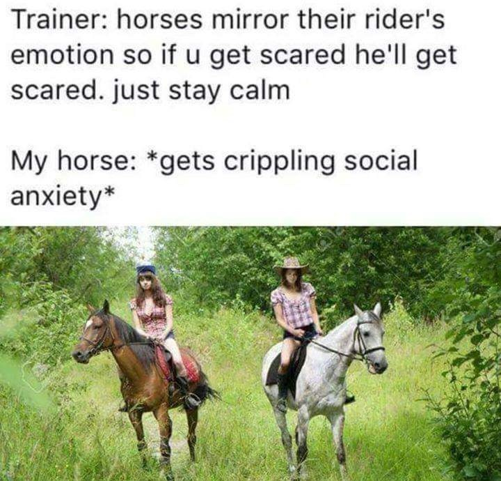 Horse - Trainer: horses mirror their rider's emotion so if u get scared he'll get scared. just stay calm My horse: *gets crippling social anxiety*