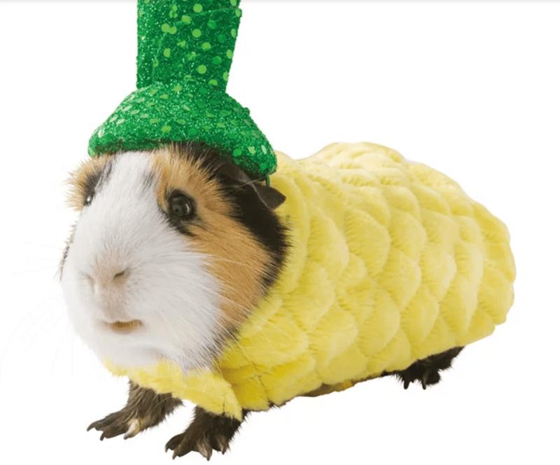 guinea pigs costume