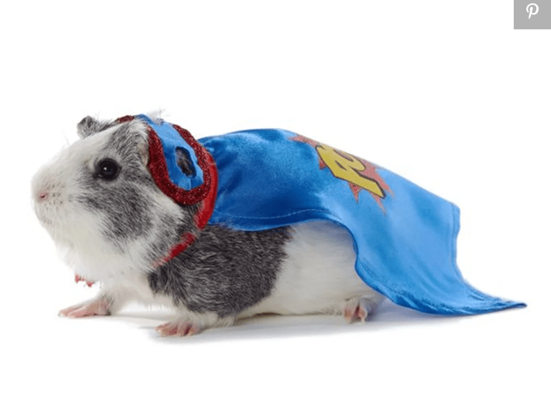 guinea pigs costume - Guinea pig