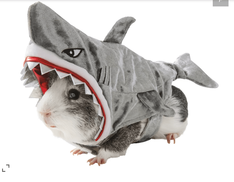 guinea pigs costume - Rat