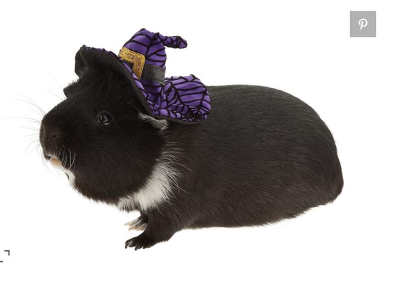 guinea pigs costume - Guinea pig - P