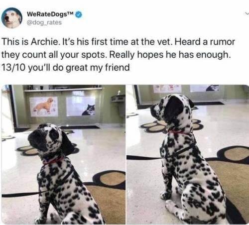 dog memes - 9348783616