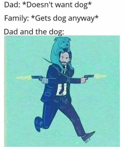 dog memes - 9348798464