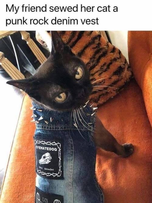cat memes - 9348800768