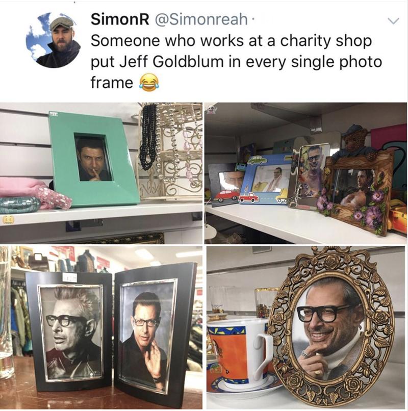 Jeff Goldblum - Human - SimonR @Simonreah Someone who works at a charity shop put Jeff Goldblum in every single photo frame