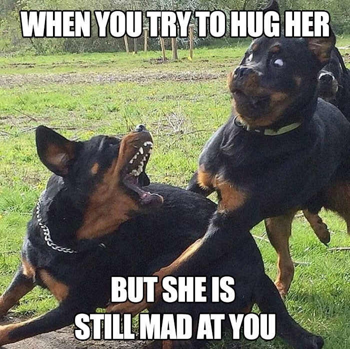 Dog - WHEN YOU TRY TO HUG HER BUT SHE IS STILL MAD AT YOU