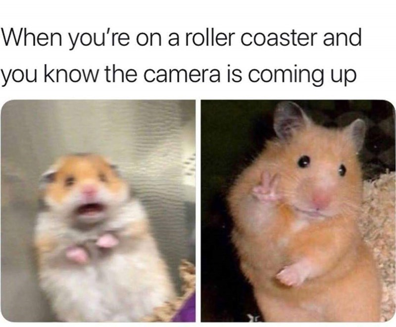 Mammal - When you're ona roller coaster and you know the camera is coming up