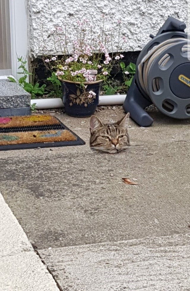 cat looks like it's head is floating