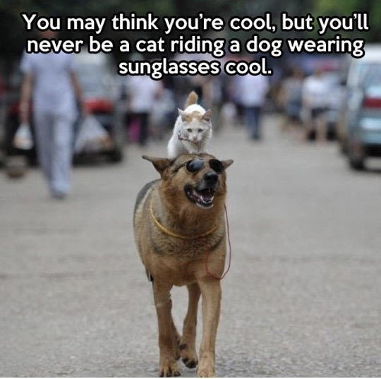 Dog - You may think you're cool, but you'll never be a cat riding a dog wearing sunglasses cool.