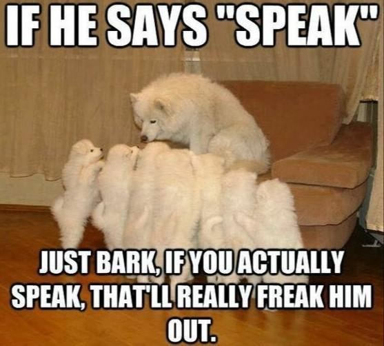 """Photo caption - IF HE SAYS """"SPEAK"""" JUST BARK, IFYOUACTUALLY SPEAK, THATLLREALLY FREAK HIM OUT."""