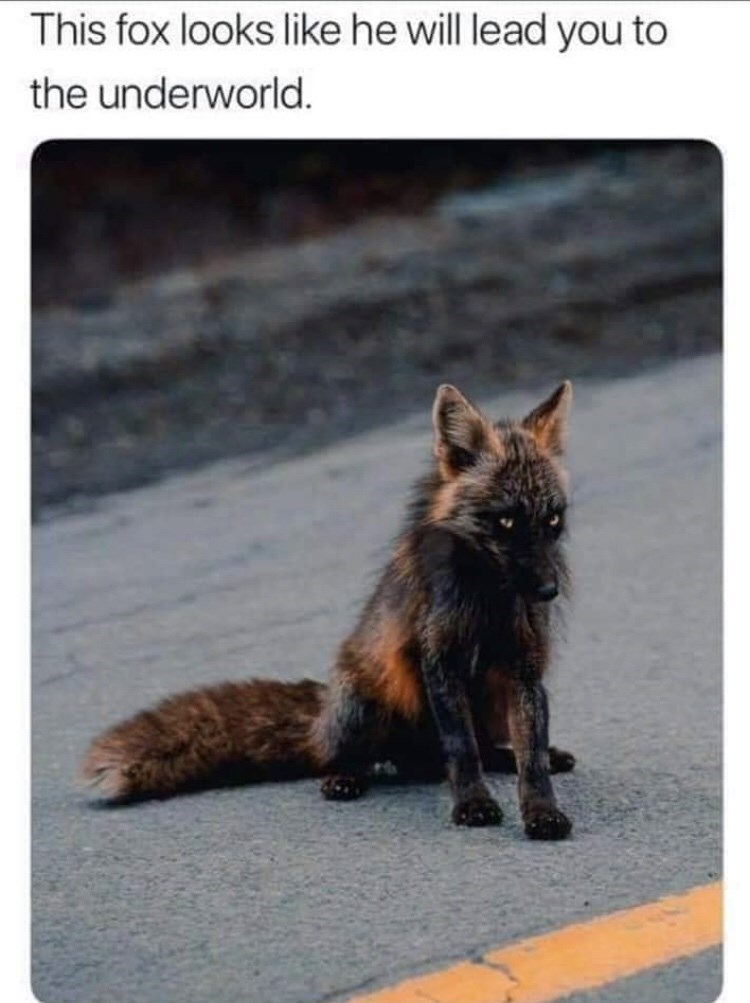 Wildlife - This fox looks like he will lead you to the underworld.