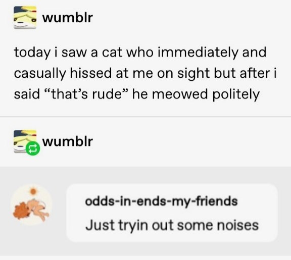 """Text - wumblr today i saw a cat who immediately and casually hissed at me on sight but after i said """"that's rude"""" he meowed politely wumblr odds-in-ends-my-friends Just tryin out some noises"""