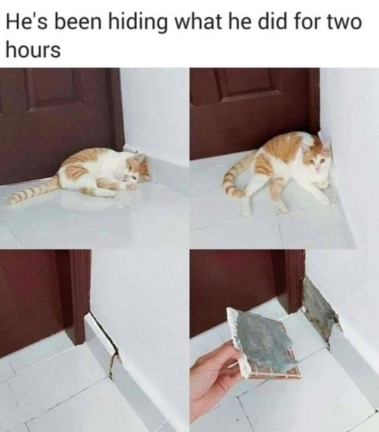 Cat - He's been hiding what he did for two hours