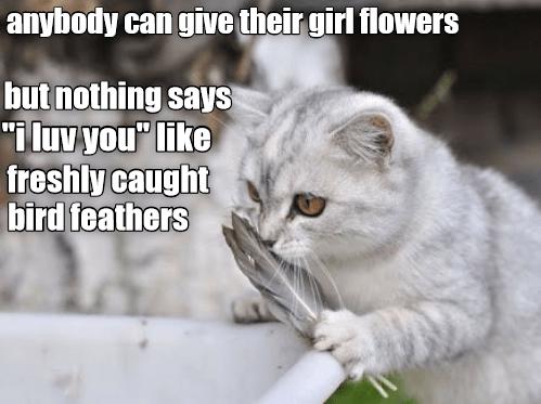 cat memes - 9349142528