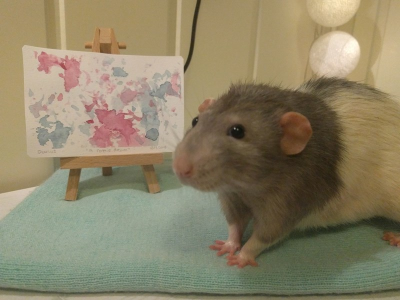 rat darius art painting