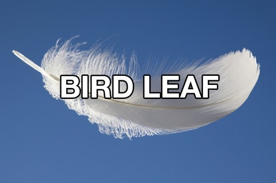 Feather - BIRD LEAF
