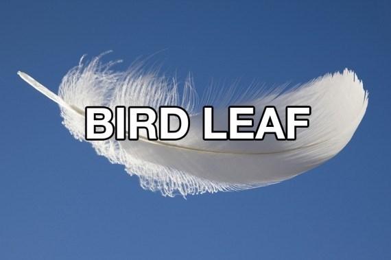 Feather - BIRD LEAF
