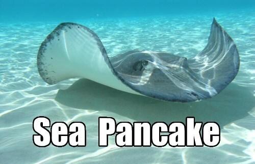 Water - Sea Pancake