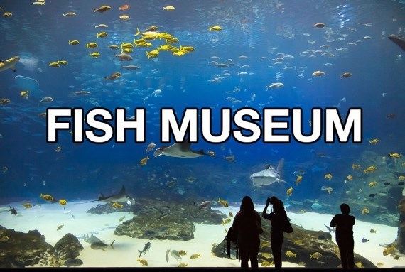 Water - FISH MUSEUM