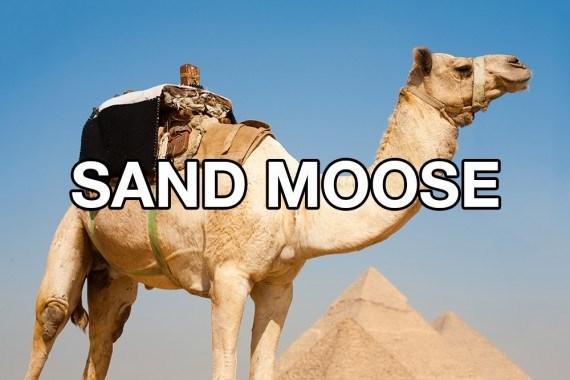 Camel - SAND MOOSE