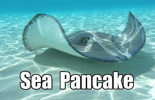 Water - Sea Pancake