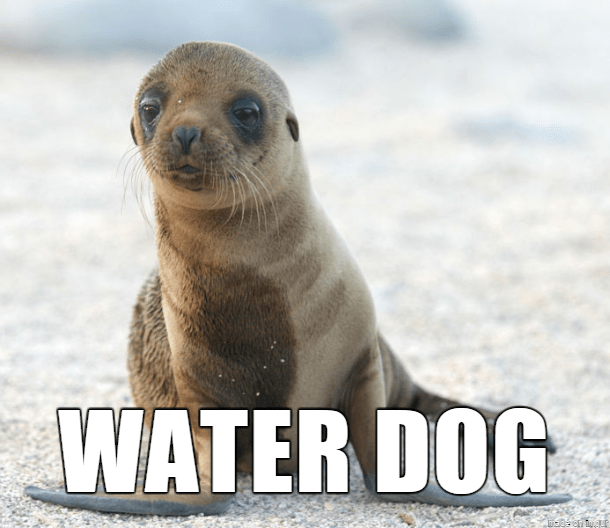 Vertebrate - WATER DOG