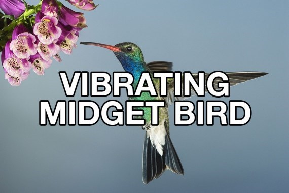 Hummingbird - VIBRATING MIDGET BIRD