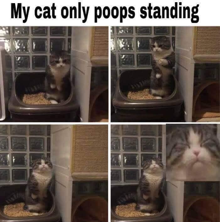 """Meme that reads, """"My cat only poops standing"""""""