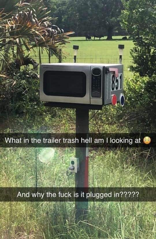 Tree - What in the trailer trash hell am I looking at And why the fuck is it plugged in?????