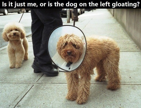 Dog - Is it just me, or is the dog on the left gloating?