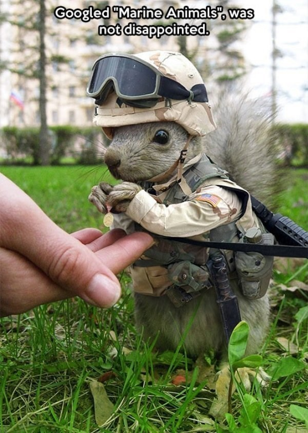 Soldier - Googled Marine Animals w not disappointed.