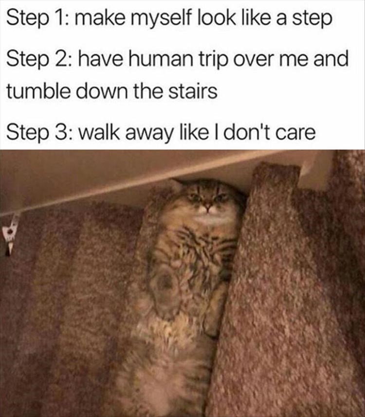Cat - Step 1: make myself look like a step Step 2: have human trip over me and tumble down the stairs Step 3: walk away like I don't care