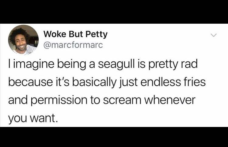 Text - Woke But Petty @marcformarc imagine being a seagull is pretty rad because it's basically just endless fries and permission to scream whenever you want