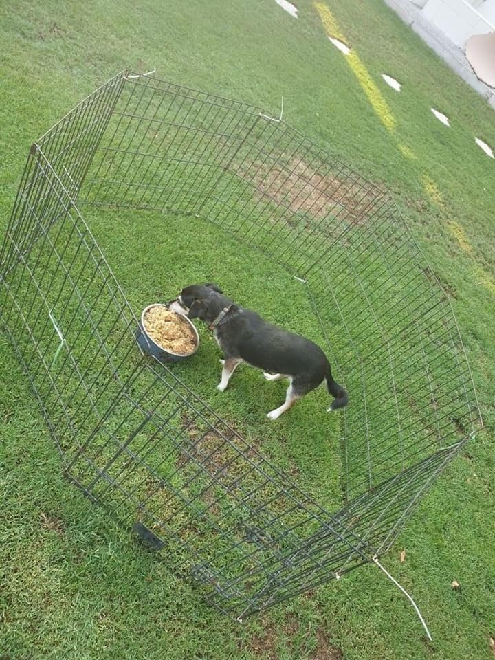 hotel feeding shelter animals - Canidae