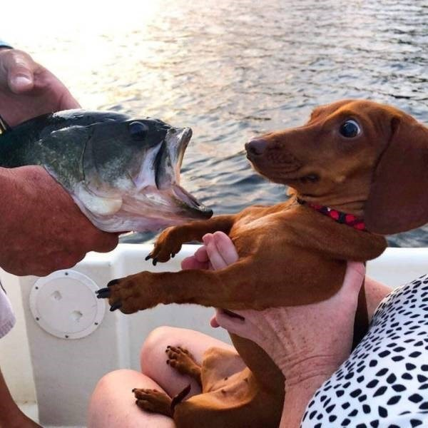 Dog reacting to meeting a fish
