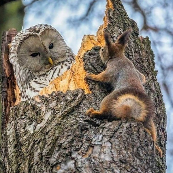 owl and bunny in a tree