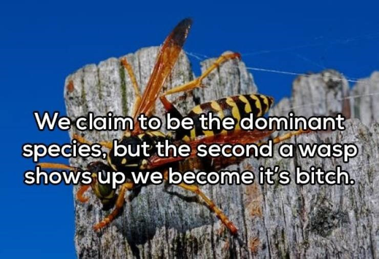 Organism - We claim to be the dominant species, but the second a wasp shows up we become it's bitch