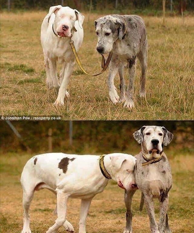 Dog - Jonathan Powrosapary.co.uk