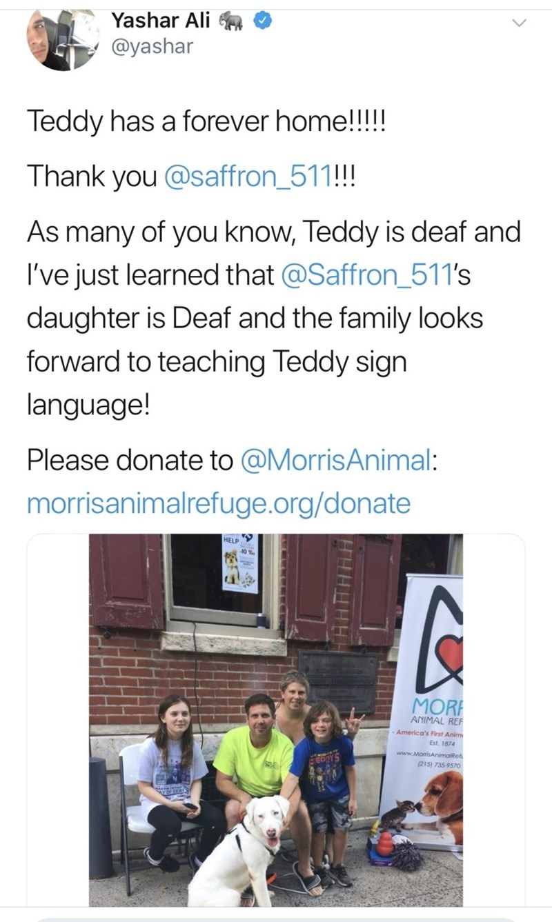 Text - Yashar Ali @yashar Teddy has a forever home!!!!! Thank you @saffron_511!! As many of you know, Teddy is deaf and I've just learned that @Saffron_511's daughter is Deaf and the family looks forward to teaching Teddy sign language! Please donate to @MorrisAnimal: morrisanimalrefuge.org/donate HELP MOR ANIMAL REF America's First Anim Est. 1874 www.MomrisAnimalRef (215) 735-9570 HH