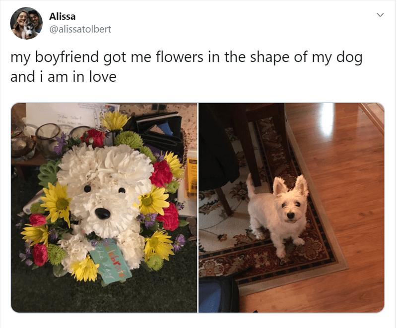 Dog - Alissa @alissatolbert my boyfriend got me flowers in the shape of my dog and i am in love Tt brat the dey