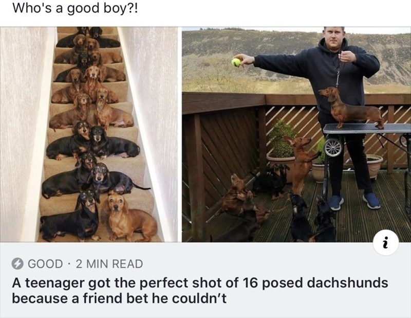 Tree - Who's a good boy?! i GOOD 2 MIN READ A teenager got the perfect shot of 16 posed dachshunds because a friend bet he couldn't