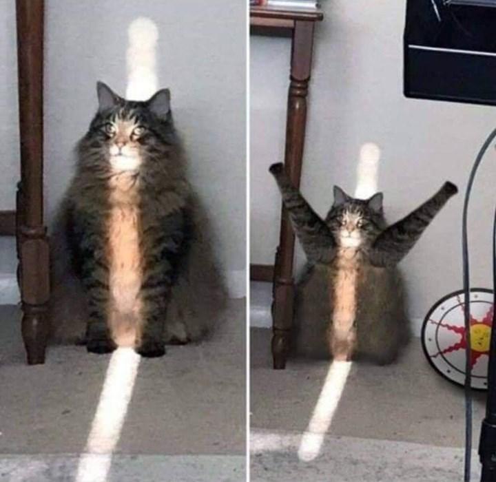 cat photos - 9350395904