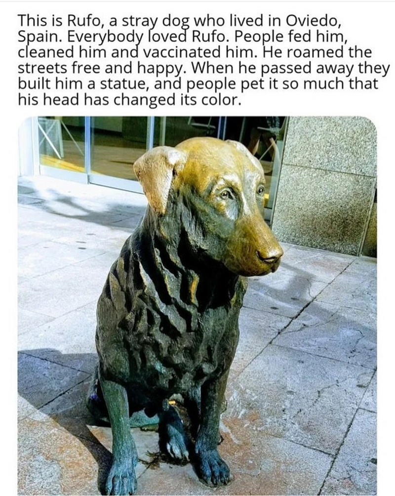 Dog - This is Rufo, a stray dog who lived in Oviedo, Spain. Everybody loved Rufo. People fed him, cleaned him and vaccinated him. He roamed the streets free and happy. When he passed away they built him a statue, and people pet it so much that his head has changed its color.