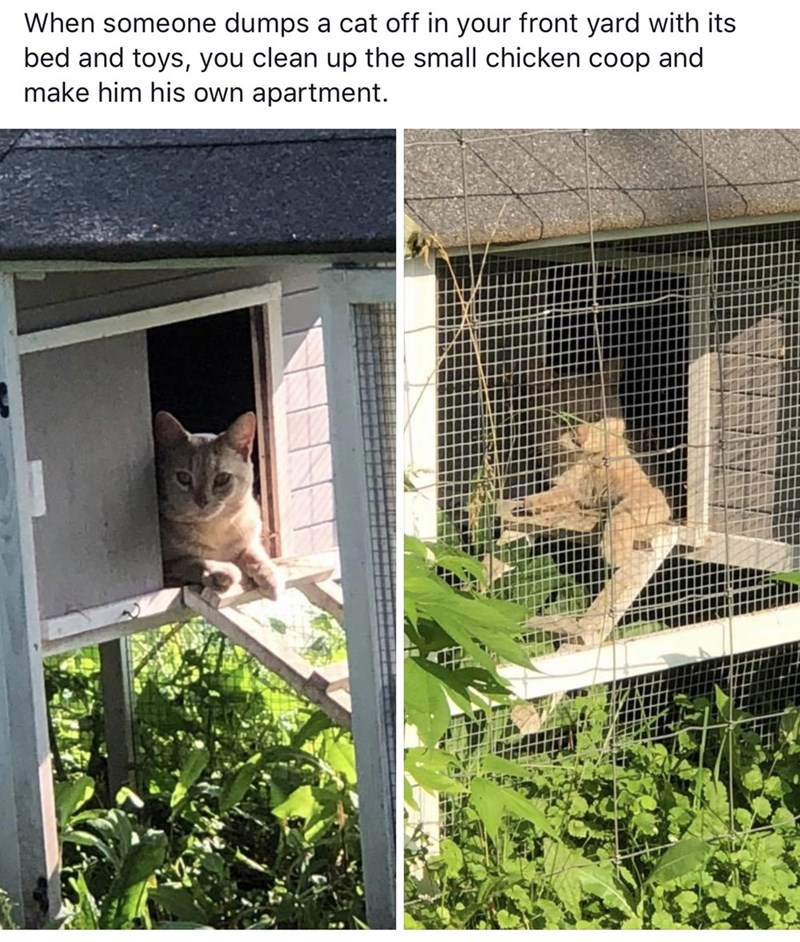 Animal shelter - When someone dumps a cat off in your front yard with its bed and toys, you clean up the small chicken coop and make him his own apartment.