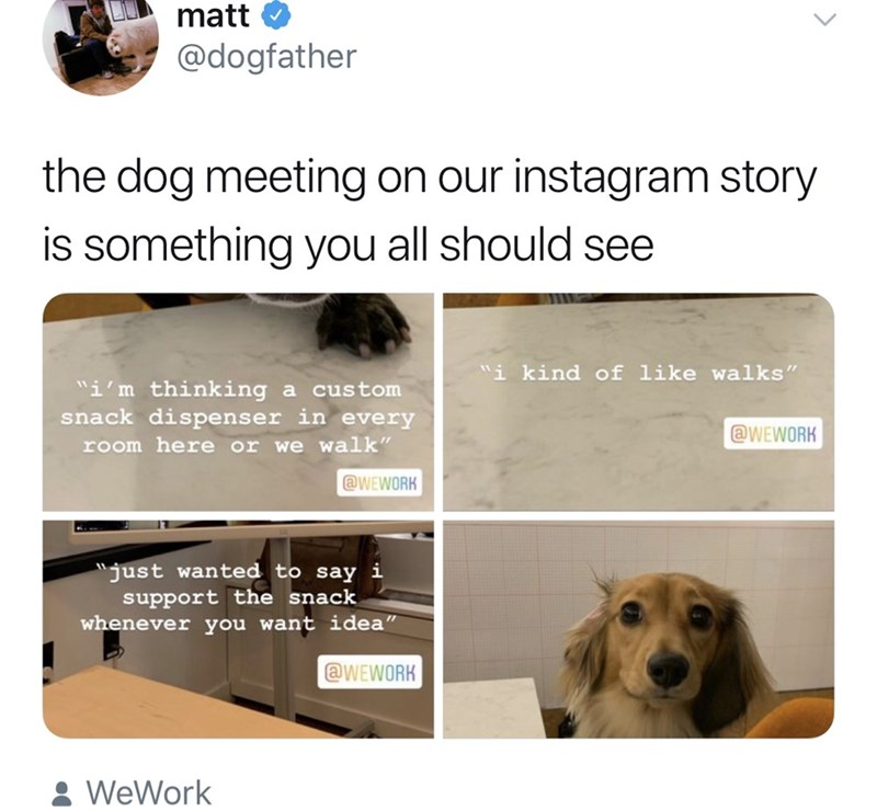 """Canidae - matt @dogfather the dog meeting on our instagram story is something you all should see """"i kind of like walks"""" """"i'm thinking snack dispenser in every a custom @WEWORK room here or we walk"""" aWEWORK """"just wanted to say i support the snack whenever you want idea"""" @WEWORK &WeWork"""